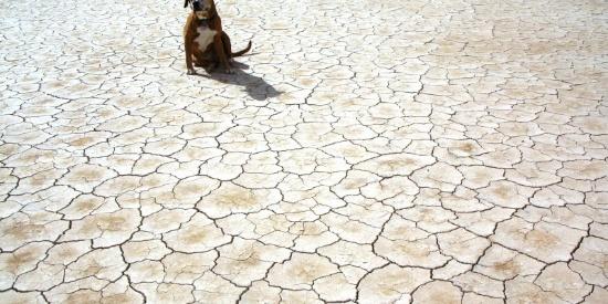 干旱龟裂的土地图片