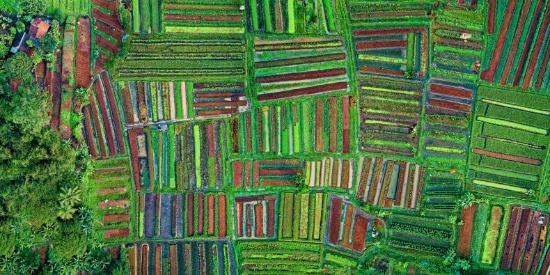 农田的航拍图片