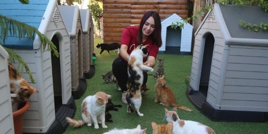 巴勒斯坦姑娘把自家花园改成流浪猫收容所