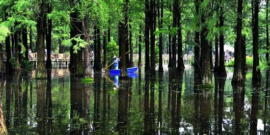 """上海青西郊野公园""""水上森林""""整修后重新开放迎客"""