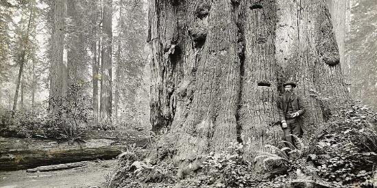 老照片再现1915年美国的 伐木潮 ,人们在巨树面前十分渺小