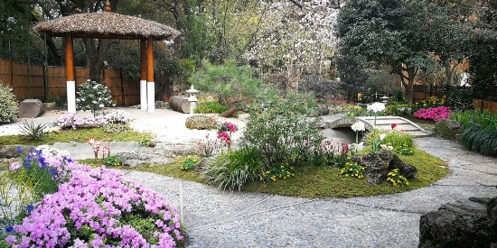 上海植物园春花如画