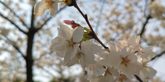 春色撩人,如诗如画
