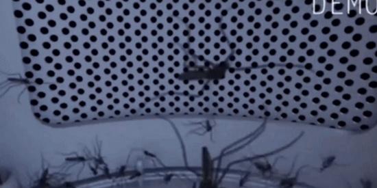 """被称为蚊子的""""黑洞"""" !亲测这款销量25万+的灭蚊灯好不好用"""