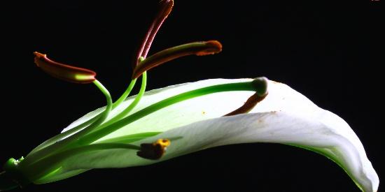 摄影爱好者如何拍出让朋友称赞的花卉照?不妨借鉴这8条经验技巧
