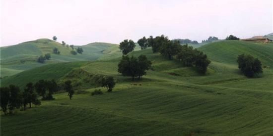 江布拉克三原色,麦田胜过仙境,辛勤的农人才是最美风景