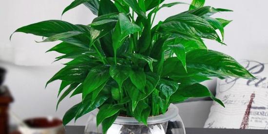 室内空气质量差,适合装饰哪些植物?推荐10种净化空气的植物