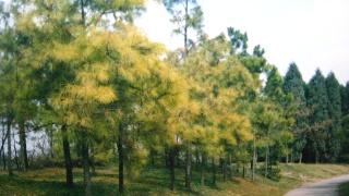 上海植物园记忆(9)